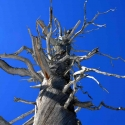 arbre-sculte