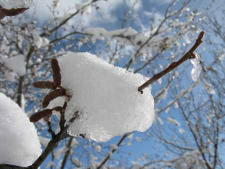 Raquettes - Paysage hivernal